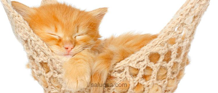 metodi per prendere sonno