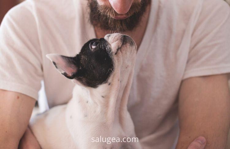 animali domestici benefici sull umore